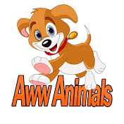 Aww Animals