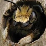 UA Beekeeping net worth