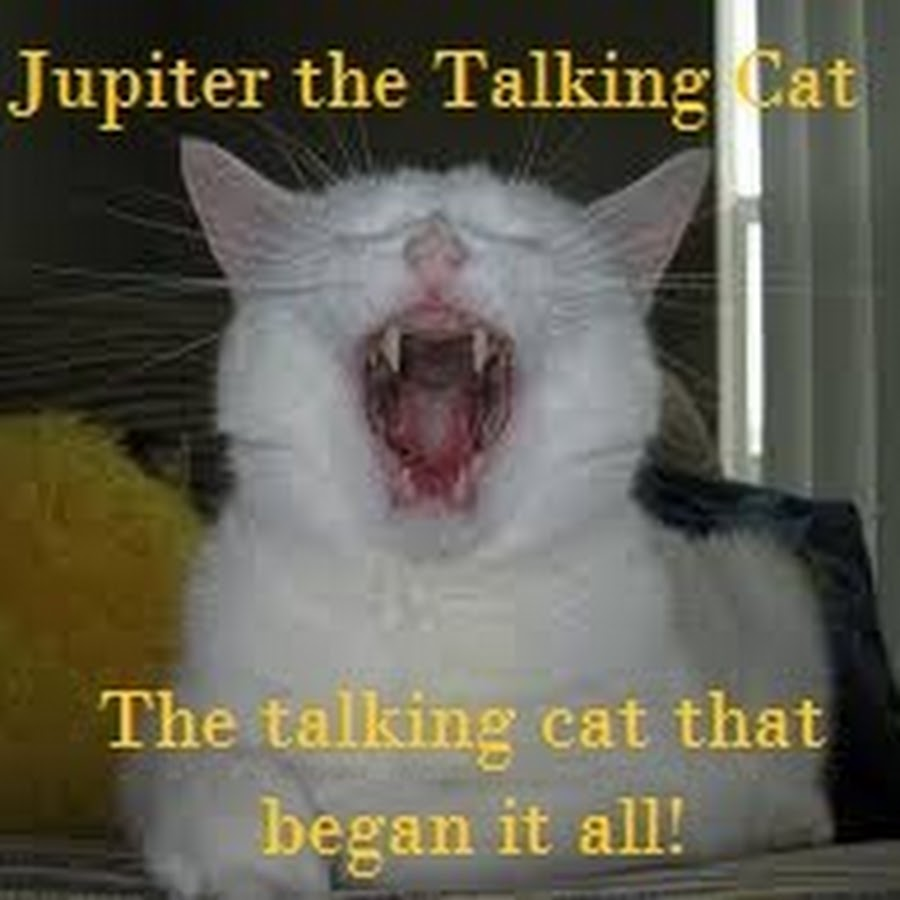 Talking Cats and a