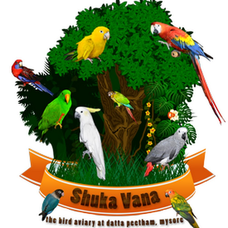 SGS Birds