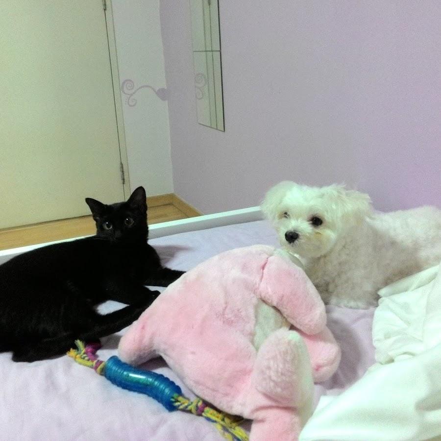 Our Pet Adventures