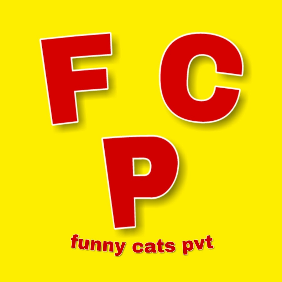 funny cats pvt