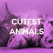 Cutest Animals