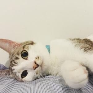 Tianshu Li