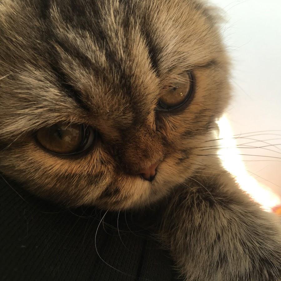 猫ウサギTV(Life with Cat &