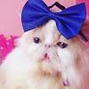 C CAT FAMILY [ mpusmiawmeow ]