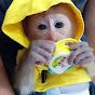 Monkey Judy