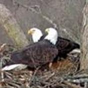 Dale Hollow Eagle Camera net worth