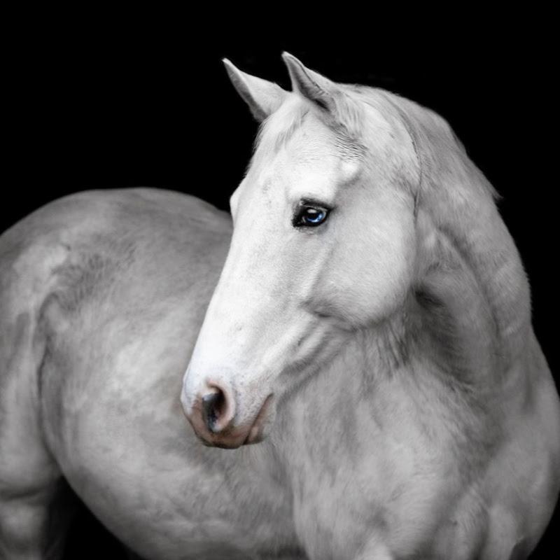 Emotional Equestrian (emotional-equestrian)