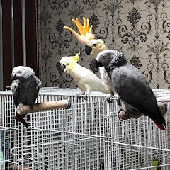 앵무새사남매-루몽다로