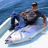 Balık Günlükleri