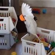 Harley the cockatoo net worth
