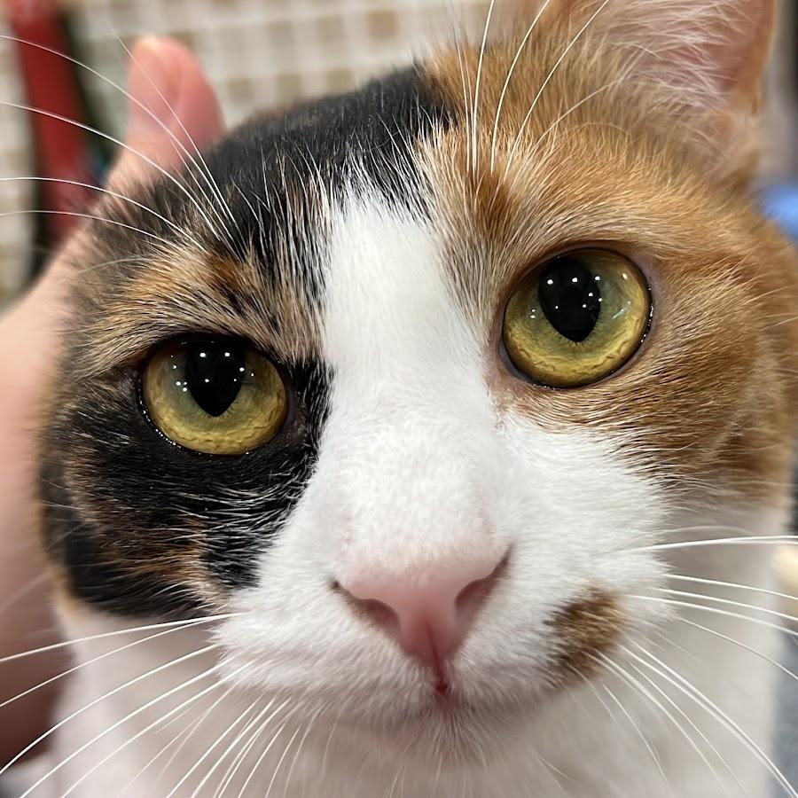 Channel あつし