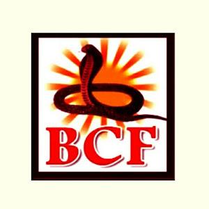 BCF Music - Bhojpuri