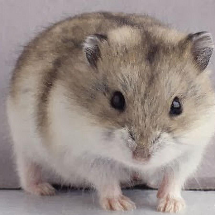 Hamster Live Youtube Перевірте hamsterlive.com за допомогою нашого безкоштовного інструменту перевірки і дізнайтеся, чи hamsterlive.com є законним і надійним. hamster live youtube