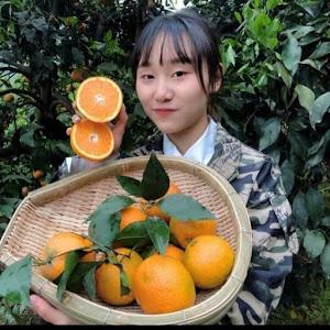 TK Fruit