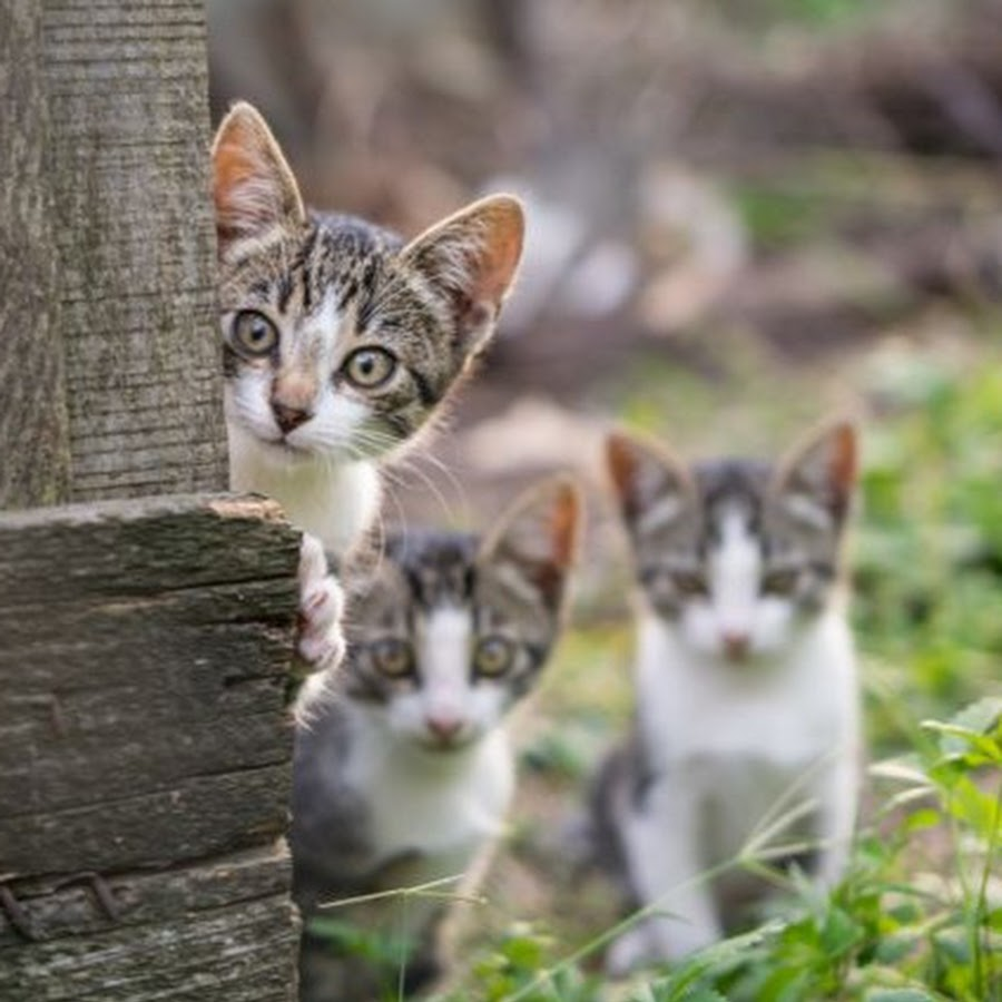 Keluarga Kucing Official