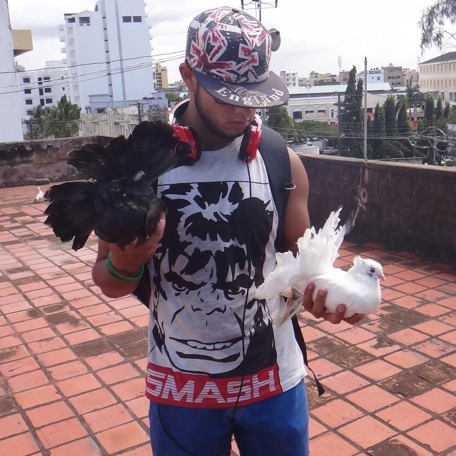 PigeonEmpire