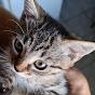 Catalin Ciprian