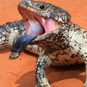 Ataque De Reptil net worth