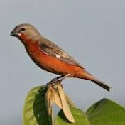 Guyana Birds net worth
