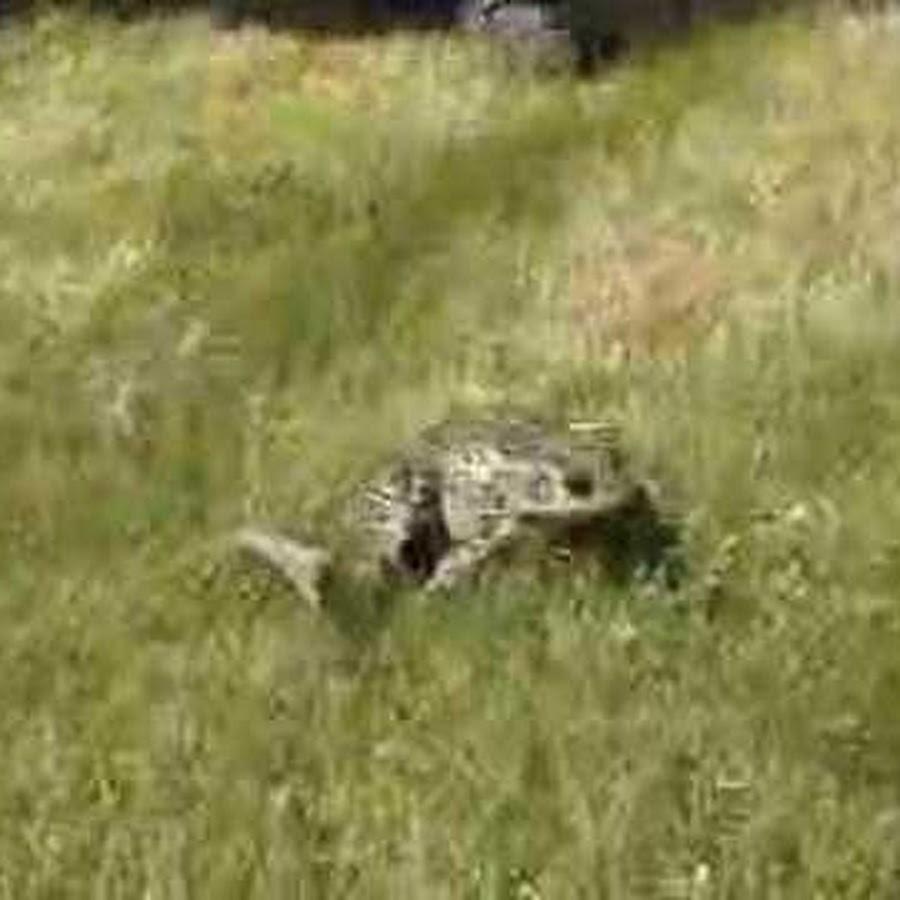 thescreamingfrog