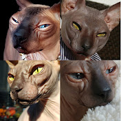 Sphynx Cats Channel