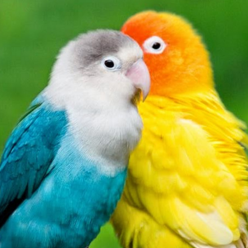 peace d amour