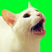 CatsCovers net worth