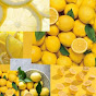 Squeeze The Day With Lemons (squeeze-the-day-with-lemons)