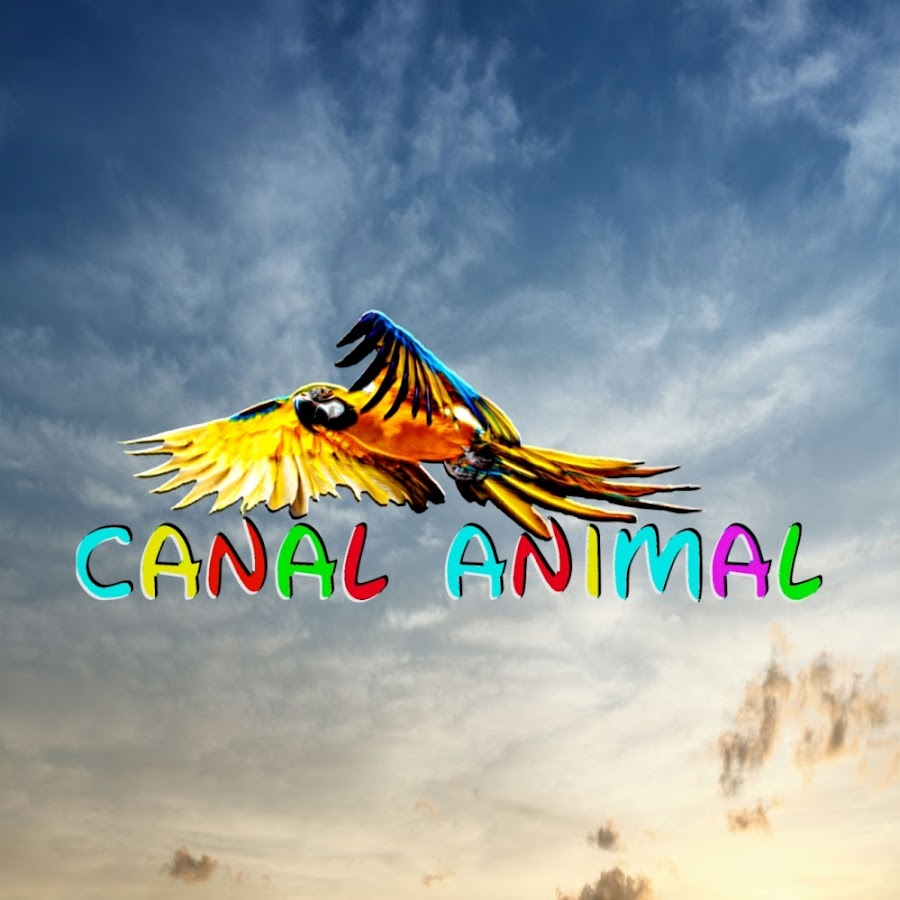 CANAL ANIMAL