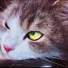 محمد فلوق / Mohamed Vlog