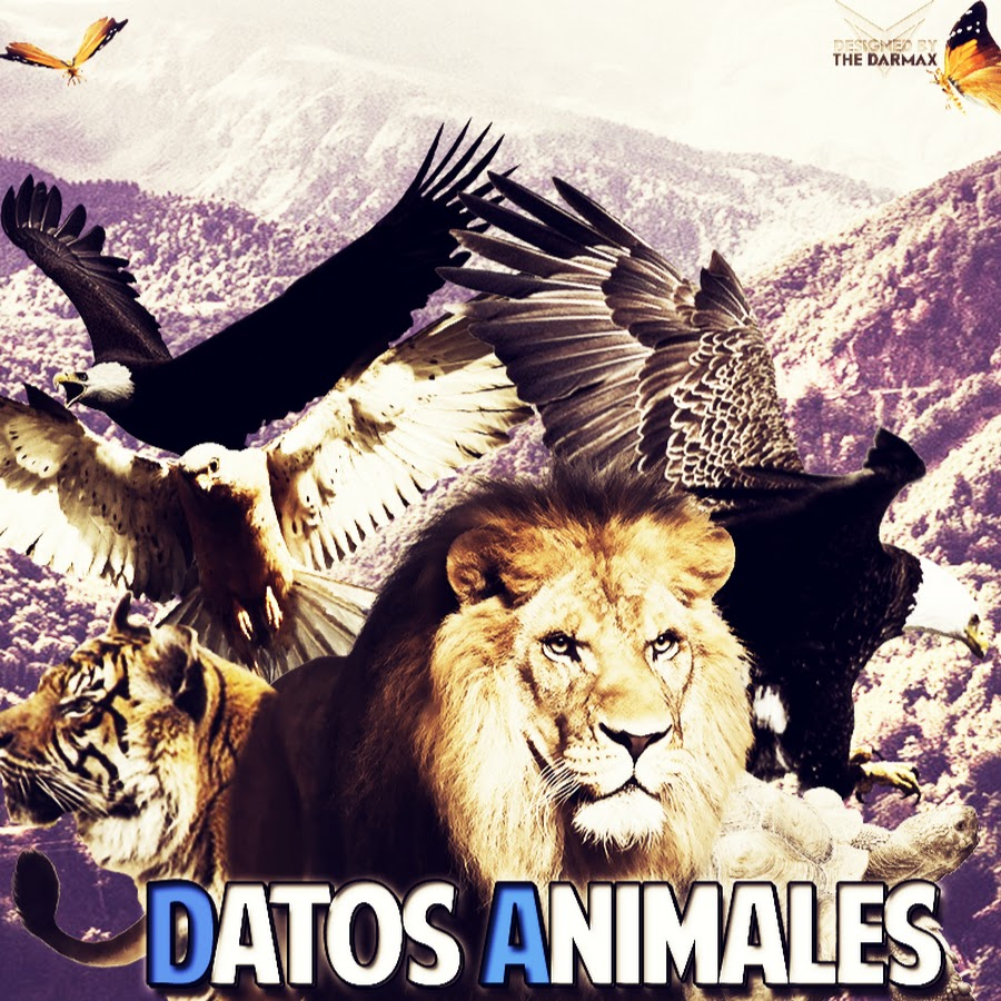 DatosAnimales - D.A.