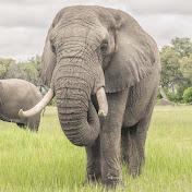 Living With Elephants Foundation net worth