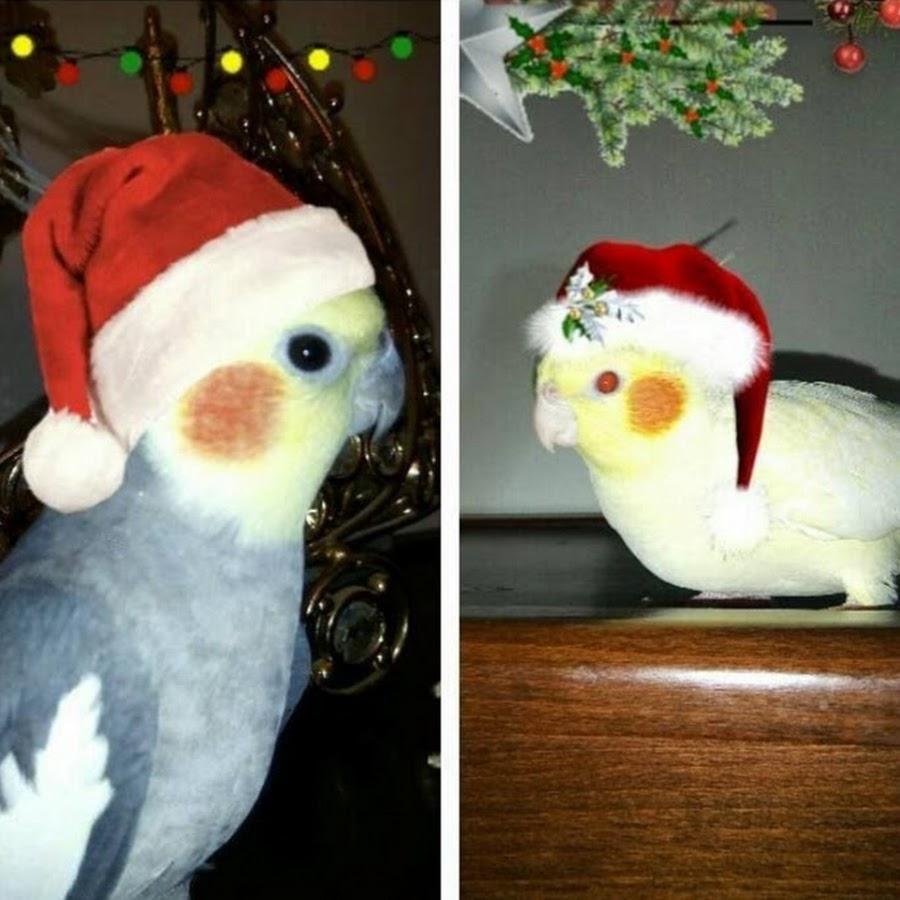 Parrots Of Algeria