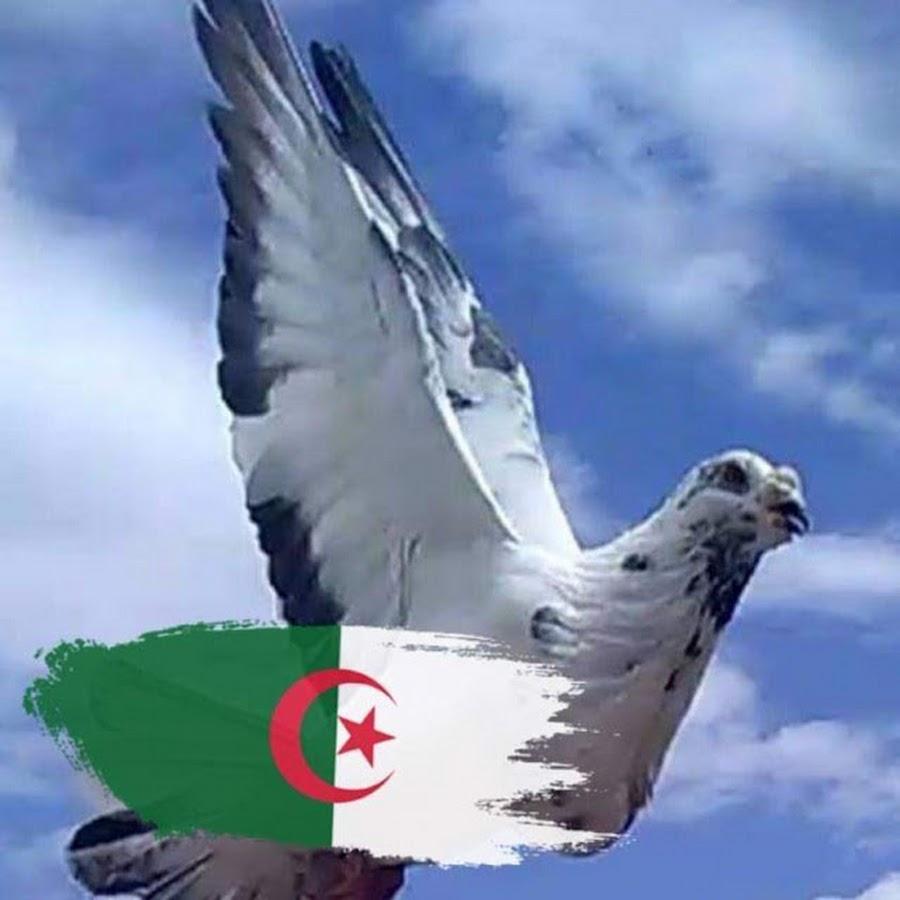 Canel Pigeon Algeria