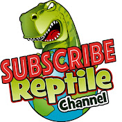 Reptile Channel net worth