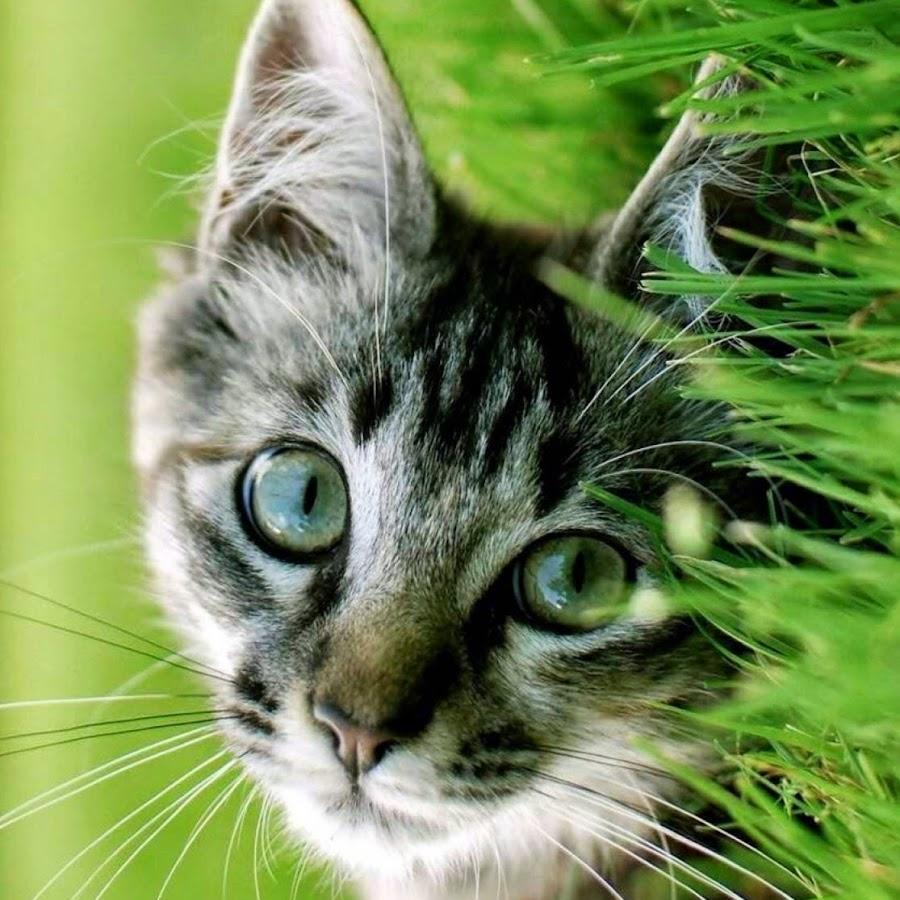 liveofcats