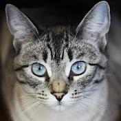 The Scratchin Post - Zorah the Cat