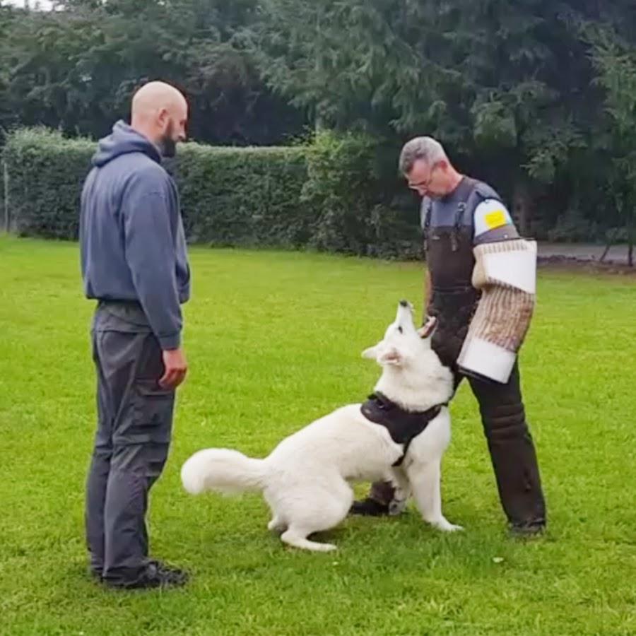 Training aus Hundesicht