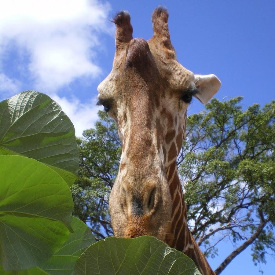 The Honolulu Zoo