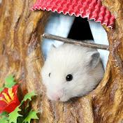 The Secret Life of my Hamster