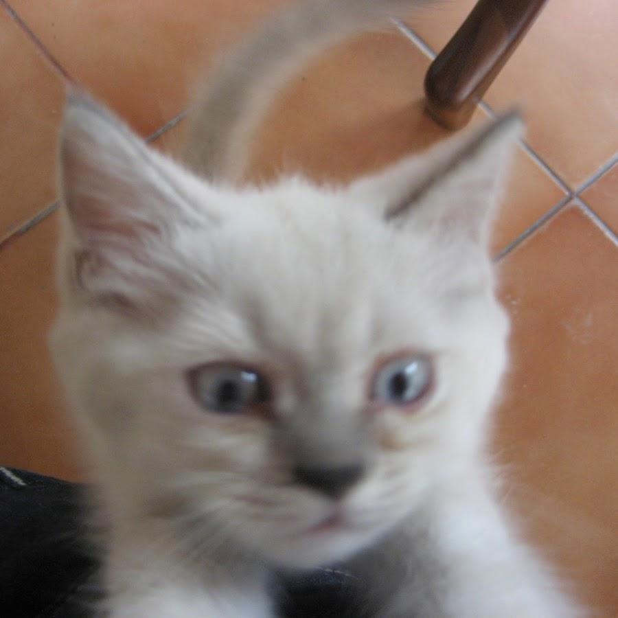 kittyc65