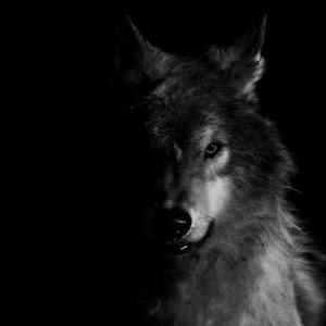 mavrick wolfman