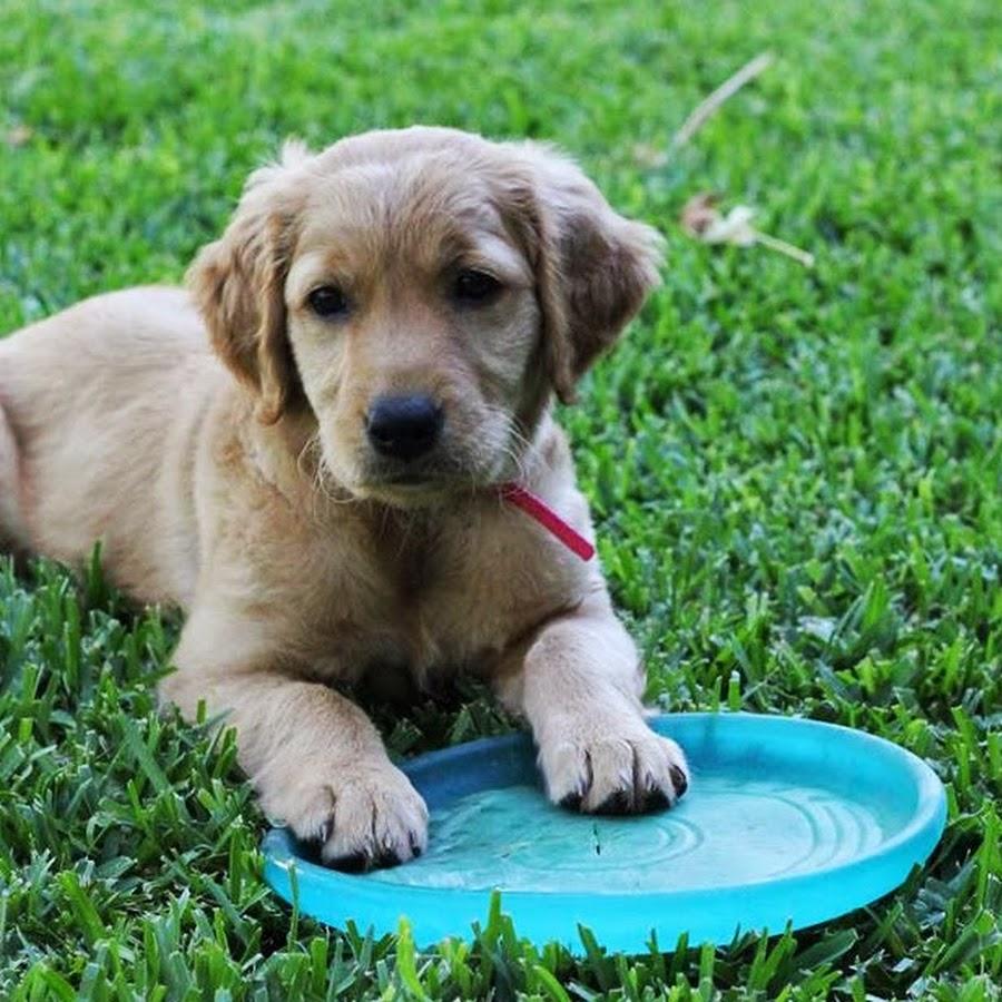 Life With A Puppy: Kona