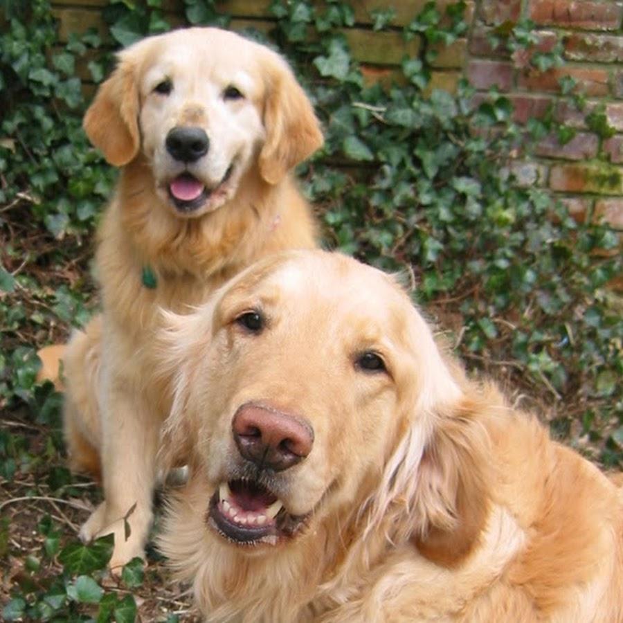 Good Dog Rescue