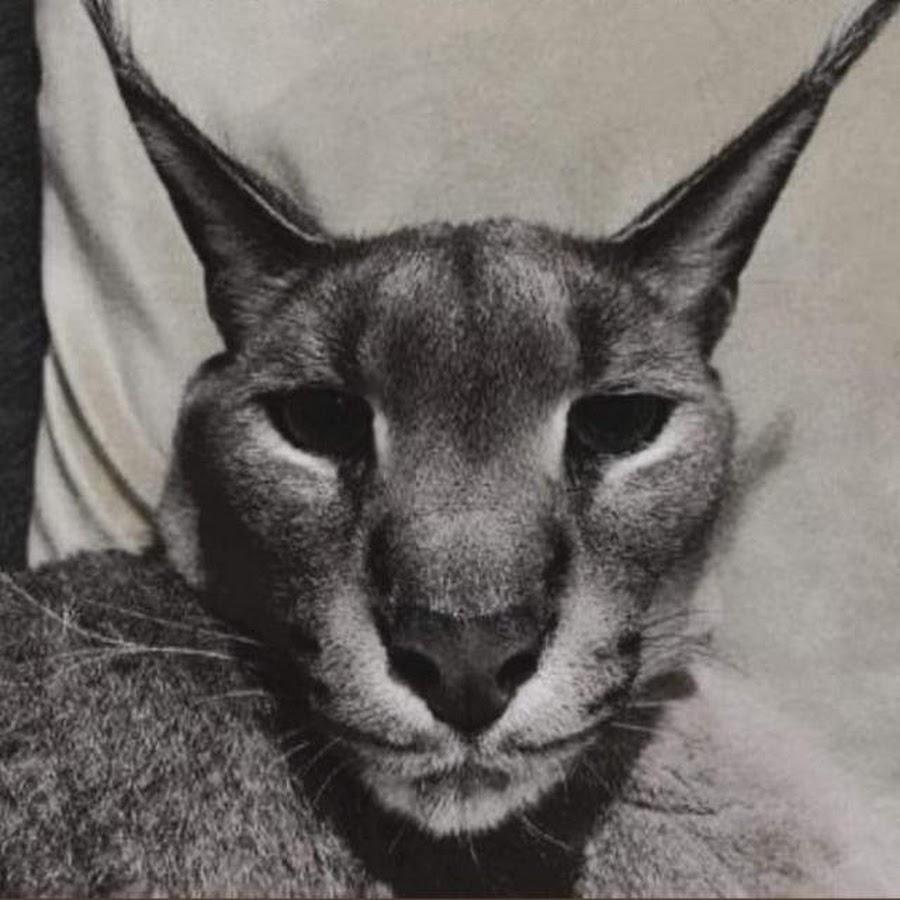 JD900YT