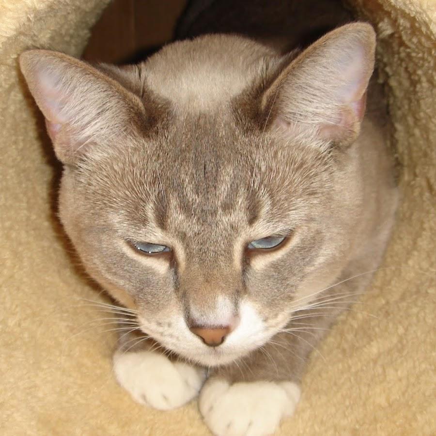 Cootie Cat