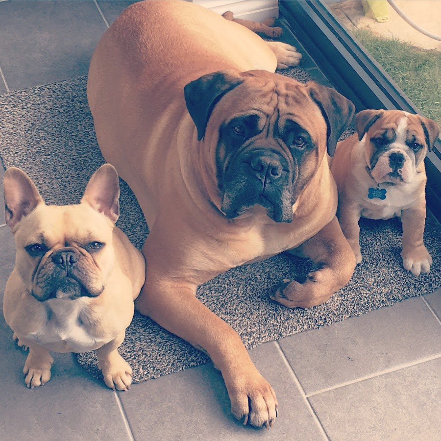 Riley, Lucia & Aston