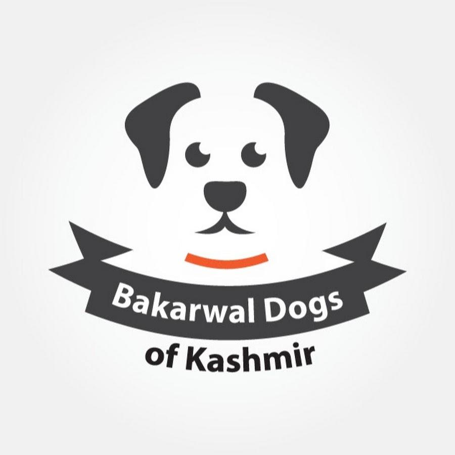 Bakarwal Dogs of